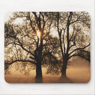 2 TREES SEPIA GOLD ORANGE MOUSE PAD