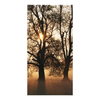 2 TREES SEPIA GOLD ORANGE PHOTO CARDS