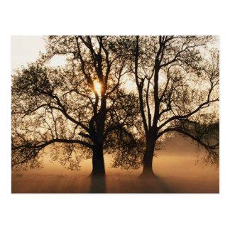 2 TREES SEPIA GOLD ORANGE POSTCARD