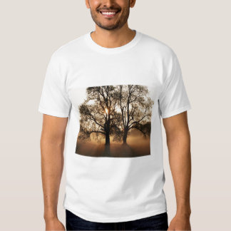 2 TREES SEPIA GOLD ORANGE T SHIRT