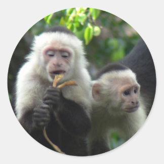 2 White Face Capuchin Monkeys Classic Round Sticker