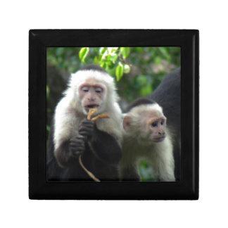 2 White Face Capuchin Monkeys Gift Box