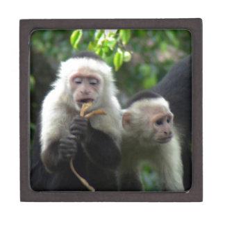 2 White Face Capuchin Monkeys Premium Keepsake Box