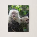 2 White Face Capuchin Monkeys Puzzle