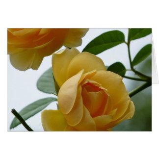 2 Yellow Roses Card