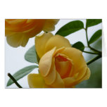 2 Yellow Roses Greeting Cards