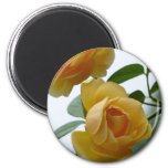 2 Yellow Roses Magnets