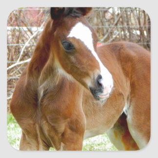 2CUTE HORSE FOAL BABY PONY SQUARE STICKER