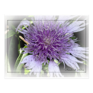 2do Flor púrpura entintada Tarjeta Postal