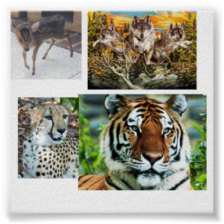 30199wolves, tiger-regal_1024x768, MuntjacDeerW... Posters