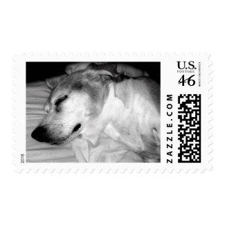 311-Beagle NAP! stamp