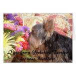 314855-7661677, le conseguí un Yorkshire Terrier f Tarjetón