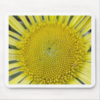 3214 Sunflower Detail 2 xs Mouse Pad