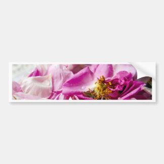 3377-Pink_rose_petals.jpg Pegatina Para Auto