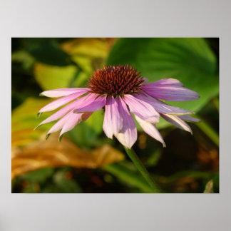 $34.95 Poster: Flower near Dusk