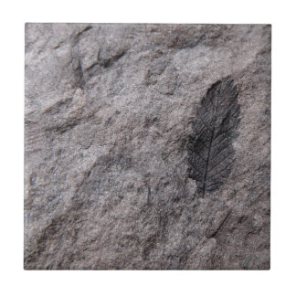 350 Million Yr. Old Plant Fossil Decorative Tile