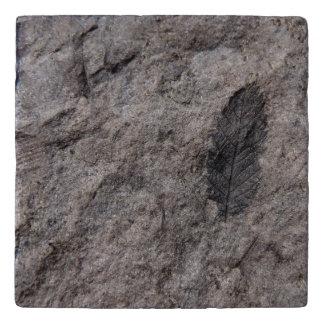 350 Million Yr. Old Plant Fossil Designed Trivets