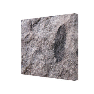350 Million Yr. Old Plant Fossil Photo Print