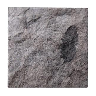 350 millones de años. Teja decorativa fósil de la