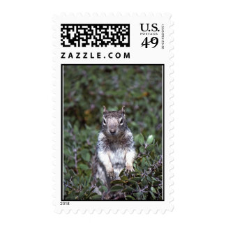 35-5-11 Squirrel Postage Stamps
