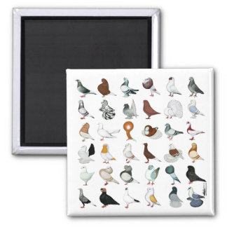 36 Pigeon Breeds 2 Inch Square Magnet