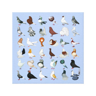 36 Pigeon Breeds Canvas Print