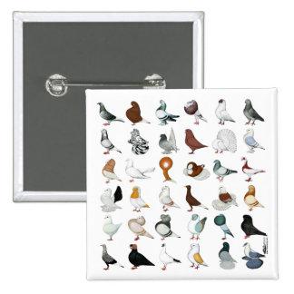 36 Pigeon Breeds Pinback Button