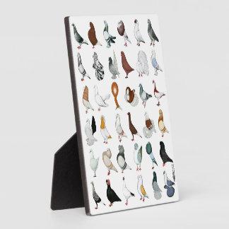36 Pigeon Breeds Plaque