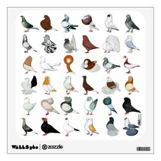 36 Pigeon Breeds Wall Decal