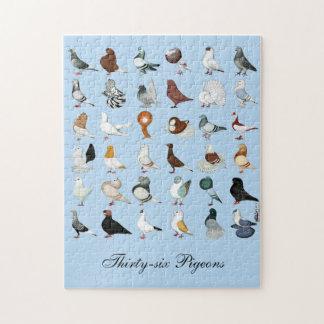 36 razas de la paloma rompecabeza
