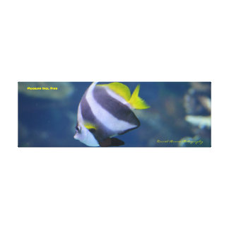 36x12x1.5 Moorish Idol Fish Wrapped Canvas Photo