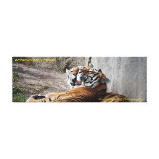 36x12x1.5 Wrapped Canvas Amur Tigers