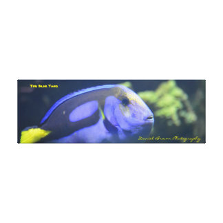 36x12x1.5 Wrapped Canvas Photo Blue Tang