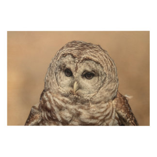 36x24 Barred Owl Wood Wall Art
