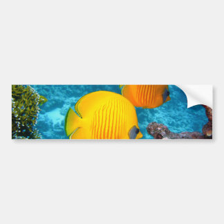 380037 fish fish exotic tropical yellow PHOTOGRAPH Bumper Sticker