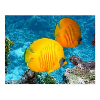 380037 fish fish exotic tropical yellow PHOTOGRAPH Postcard