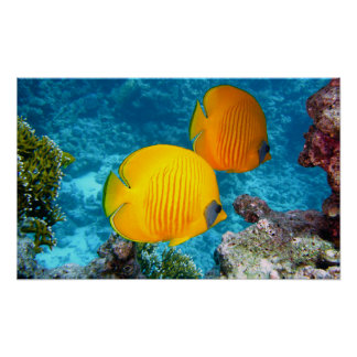 380037 fish fish exotic tropical yellow PHOTOGRAPH Poster