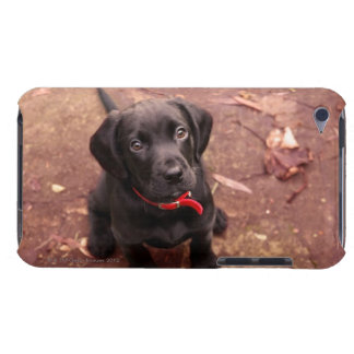 39 Week Old Black Lab iPod Touch Cover