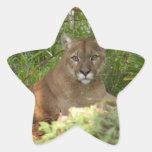 3.5x3.5-Template-Star Sticker