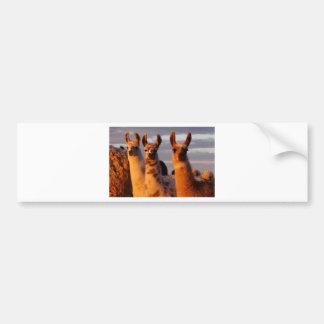 3 Amigos Bumper Sticker