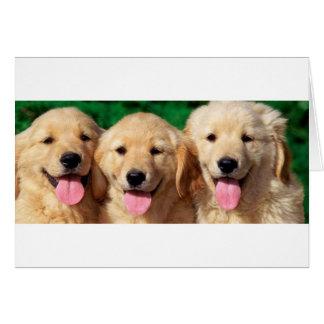 3 Amigos Greeting Card