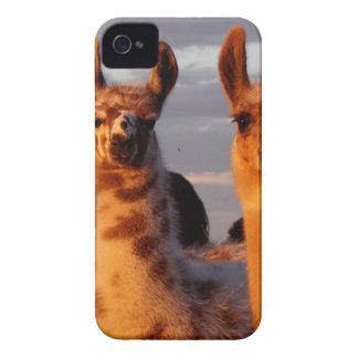 3 amigos iPhone 4 Case-Mate carcasas