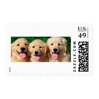 3 Amigos Postage