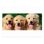 3 amigos tarjeta postal