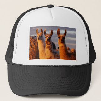 3 Amigos Trucker Hat