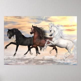 3 Arabians Value Poster Paper (Matte)