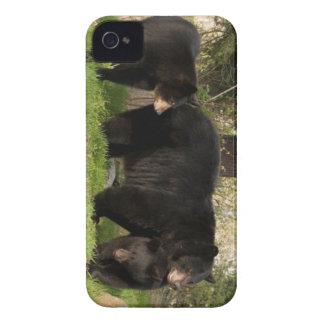 3 Black Bears iPhone 4 Cases