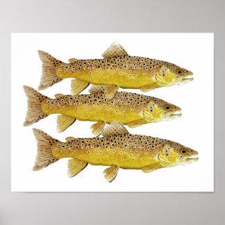 3 Brown trout Print