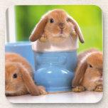 3 Bunnies Beverage Coasters
