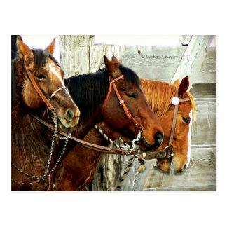 3 cabezas de caballo postal